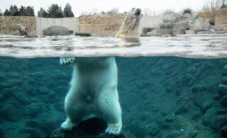 ÜRITUS | Nädalalõpp toob loomaaeda suure loodusfestivali