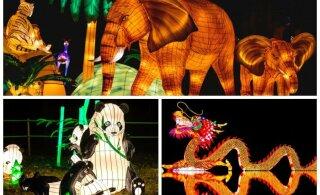 ГАЛЕРЕЯ: Сегодня на Певческом поле открывается фестиваль китайских фонарей