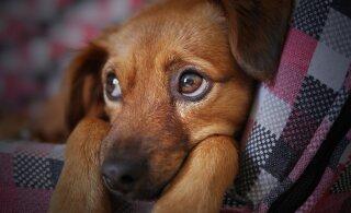 Ole ettevaatlik: need on tegevused, mida su koer ei salli