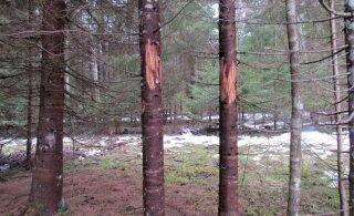 Leili metsalood | Homme on kevad!