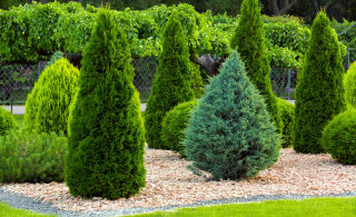 TULETAME MEELDE | Ülimalt tähtis aiatöö, mille sa oled talveootuses tõenäoliselt täielikult unustanud