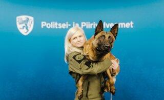 Хороший мальчик! Полицейский пес Шарки нашел подростка, напавшего с ножом на мужчину в Эмари