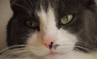 Aadu, Masoni ja Frida lugu   teistest erinev toit vangistas kassid puuridesse