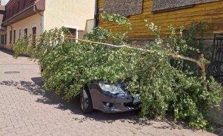 Субботний шторм оставил без электричества свыше 34 000 домохозяйств