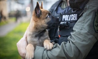 ФОТО | В рядах полиции очередное пополнение — щенок Сям!
