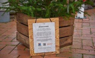 FOTOD | Kaheksas Eesti linnas püüab pilke abivajavate loomade auks kaunistatud jõulupuu