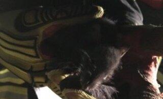 ФОТО: Женщина испугалась бегавшей по комнате крысы и вызвала спасателей