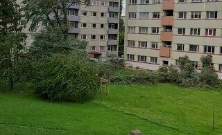 VIDEO | Lageraie Paide moodi: kortermajade vahel langesid korraga kaks puud, riivates seina ja aknaid