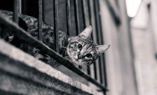 Rõdu ja lemmikloomad: pane tähele ohukohti ja väldi neid