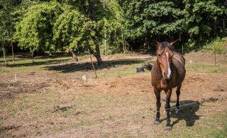 Päästjad pidi kraavi kinni jäänud hobuse traktoriga välja aitama