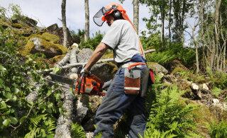Keskkonnaministeerium ja puidutööstus eiravad raierahu küsimuses looduskaitseseadust