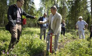 В рамках общественной программы Alexela по всей Эстонии приступили к посадке 20 000 деревьев