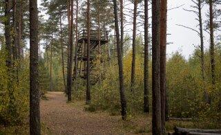 Таллинн приглашает в поход Пяэскюласкому болоту на русском языке