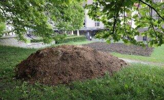 ФОТО: К злополучному картофельному полю на Харью привезли кучу навоза