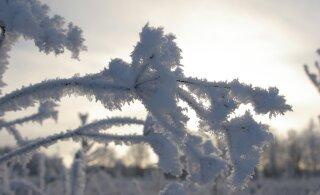 В рождественскую ночь мороз усилится до минус 12 градусов