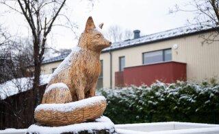 ФОТО | Зима приходит по расписанию? В последний день ноября землю укрыло снегом