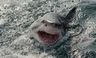 """Spielbergi filmile """"Lõuad"""" aluse pannud autor kahetses hiljem, et haisid verejanuliste koletistena kujutas"""