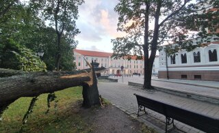 FOTOD | Torm murdis Toompeal suure puu