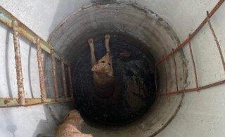 ФОТО   Собака упала в колодец, на помощь пришли спасатели