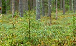 Metsanduse huvirühmad on rääkinud: mõnes asjas lepiti kokku, et nendes ollakse eri meelt
