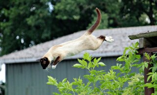 Kodukassil on uskumatud võimed: kui kõrgele on nad võimelised hüppama?