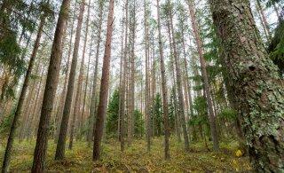 Отец с тремя детьми прятался в лесу от коронавируса