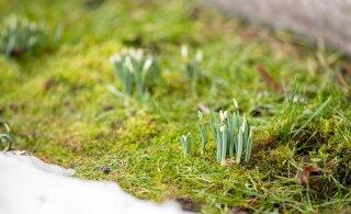 Весна идет, весне дорогу: чем порадует нас погода в первые дни марта
