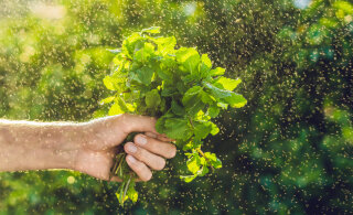 7 taime, mis aitavad sinu ellu tõmmata rohkem positiivset energiat