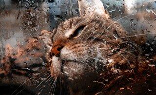 Kas ilm mõjub kassile samuti nagu inimesele?