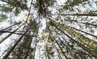 Metsakogu liikmed loodavad, et terve mõistus võidab