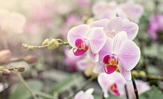 <em>Feng shui</em> nipid: need viis lille toovad sinu koju parima energia