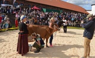 Maatõugu lehm Nupi püstitas lüpsikiiruse rekordi