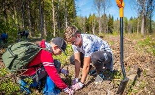 VIDEO ja FOTOD | RMK metsaistutuspäeval pandi maha üle 45 000 puu