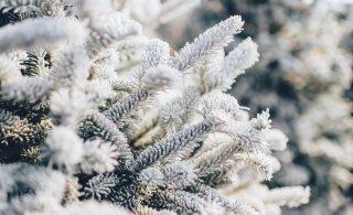 Прогноз погоды: на следующей неделе короткое потепление сменится заморозками