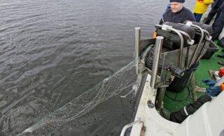 В оставленных в Чудском озере сетях гибнут сотни тонн ценной рыбы