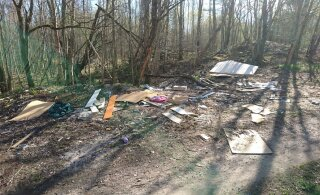RMK: мусора в гослесах меньше не становится, в прошлом году там собрали 250 тонн отходов