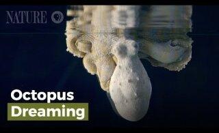 VIDEO | Magav kaheksajalg vahetab värvi, süüdi on unenäod
