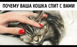 Почему кошки любят спать с нами в кровати?