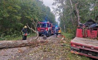 В Таллинне на легковушку упало дерево. Водителя доставили в больницу