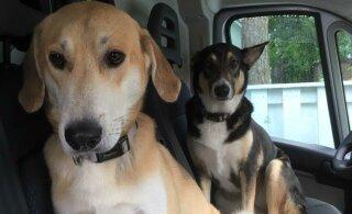 Koerad oskavad olla efektiivsed manipuleerimismasinad