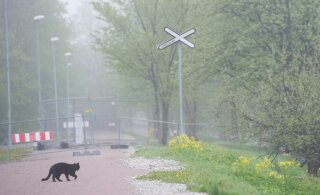 Утром в воскресенье туман, но днем будет тепло и без осадков!