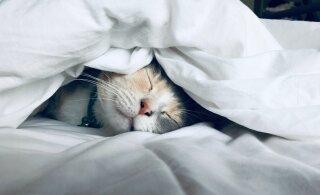 Täna tähistatakse rahvusvahelist unepäeva! Jagame sinuga kaheksat nõuannet, mis aitavad une kvaliteeti parandada