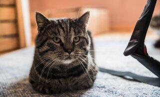 Tigu pole kaugeltki kõige veidram Omniva saadetis: kord pandi lihtsalt kass pakiautomaadi lahtrisse