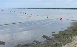Осторожно! Пляж Пирита захватили сине-зеленые водоросли