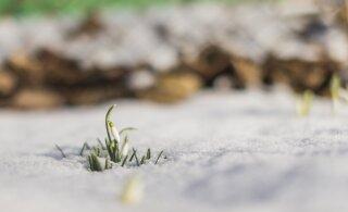 Финский метеоролог: весеннее тепло может смениться снова зимними морозами