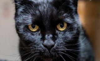 ФОТО | Как бы выглядели коты в фильмах известных режиссеров