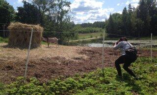 Avatud talude päev | Kolotsi talu sikk tegi kolme päevaga 30 kitsele talled