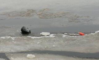 В Пярнумаа едва не утонули два рыбака. Спастись помогли нехитрые приспособления