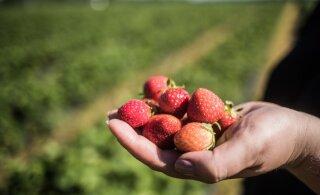 В Финляндии планирует организовать чартеры для доставки в страну сезонных работников с Украины