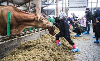 В Пярнумаа построили крупную ферму на 1000 дойных коров